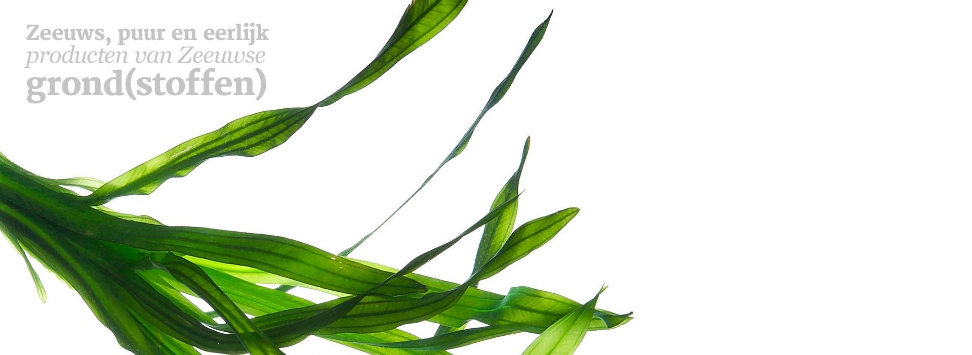 weed-seaweed-nature-rare-com-11047462